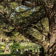Ancient Cedar of Lebanon Tree